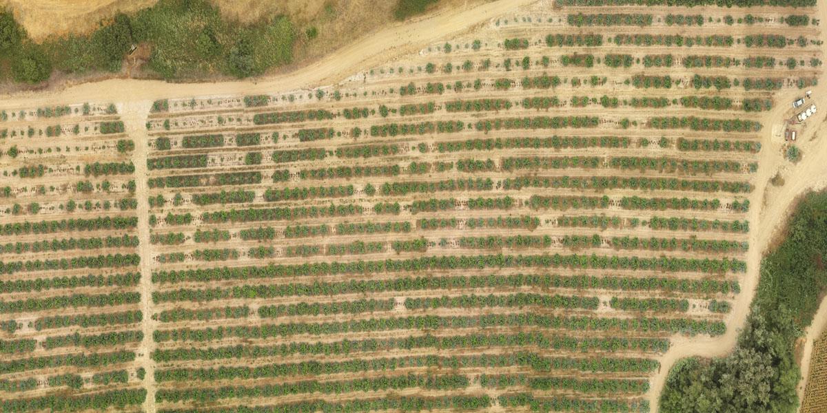 drones-para-agricultura-de-presicion